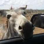 Photo de Donkey Sanctuary Bonaire