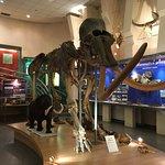 Я думала, что мамонты были гигантскими исполинами, как динозавры. Оказывается, только 3-4 метра