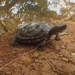Tortugas en su naturaleza
