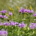 Wild flowers near the canyon