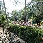 Photo of Bush Garden