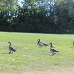 Ducks all around,