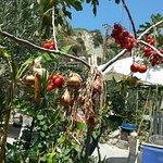 Photo of Cava Del Fresco