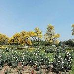 Zakhir Hussain Rose Garden
