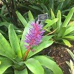 Naples Botanical Garden Foto