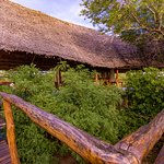 "Selous Impala ""Tree-top style lodge"""