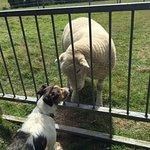 Foto di Bulleigh Park Farm