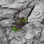 Foto di Heart of Burren Walks