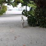 Photo of Nice Sea Resort