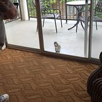 This little guy came to visit us at breakfast so we shared a biscuit with him. :)