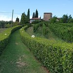 Agriturismo Niccolai Torre Palagetto Foto
