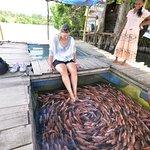 Fish Feeling