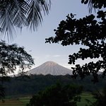 Mount Sumbing by the terrace