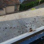 impossible de laisser la fenêtre ouverte car des pigeons nichent dans la corniche