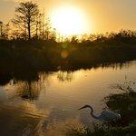 Sonnenuntergang am Big Cypress Zentrum
