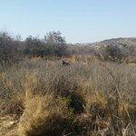 Groenkloof Nature Reserve Foto