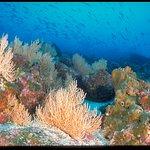 Dive Center Silberstein Foto