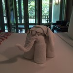 the towel elephant wearing my glasses
