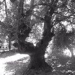 Bellissimo albero in prossimità delle sorgenti