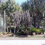 Foto de California Palace
