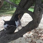 He climbed the tree to look for lizards