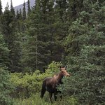 Denali National Park Campgrounds Foto
