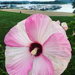 Fourwinds Lakeside Inn & Marina Foto