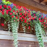 Beautiful flowers grace the front of the lodge.