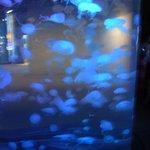 More jellyfish!