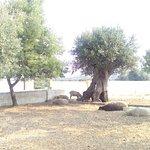 Bilde fra 1395245