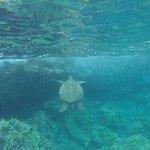 Snorkelen bij Molokini en schildpadden kijken (deluxe tour van 9.00 tot 13.00 uur)