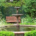 Quiet sanctuary with birds in bath