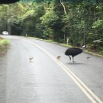 Photo de Daintree Tours