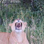 She was just yawning - bored with our company!