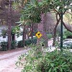 Photo of Camping Centro Turistico Belvedere