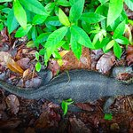 Monitor lizard spotted! :)