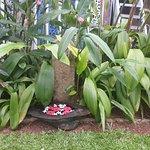 garden in spa