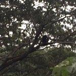 Monkeys in the trees!