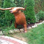Bills Bull at Patchwork Inn