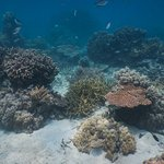 a sampling of the corals at the house reef