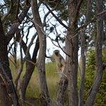 Welgevonden Nature Reserve Foto