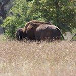 Wichita Mountain Wildlife Refuge is just a few miles away.