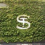 Nice little ivy wall.