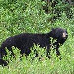 zwarte beer gezien vanaf de HW16