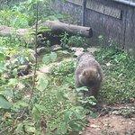 Photo of 1o Parco Zoo della Fauna Europea