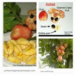 About ackee