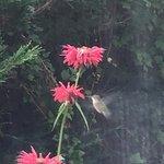 hummingbird outside restaurant window