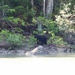 River Safari Foto