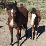 Foto de Wild Horse Safaris