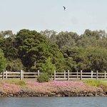 Newells Paddock Wetlands